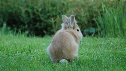 ¿Qué comen los conejos?