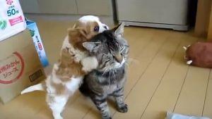 Un gato muy paciente con su nuevo compañero