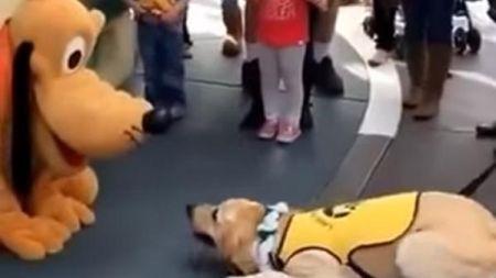 Un perro guía se emociona al conocer a Pluto