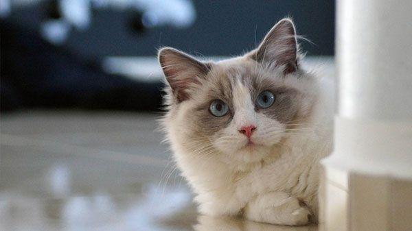 Vitaminas para gatos: ¿para qué sirve cada suplemento?