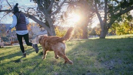 10 tips que mejoran el comportamiento de los perros