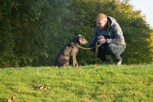 10 tips que mejoran el comportamiento perros