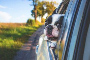 como-viajar-con-tu-mascota-en-coche