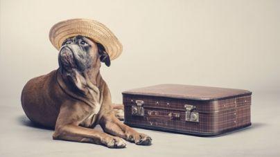 Descubre fantásticos hoteles que admiten perros para estas vacaciones
