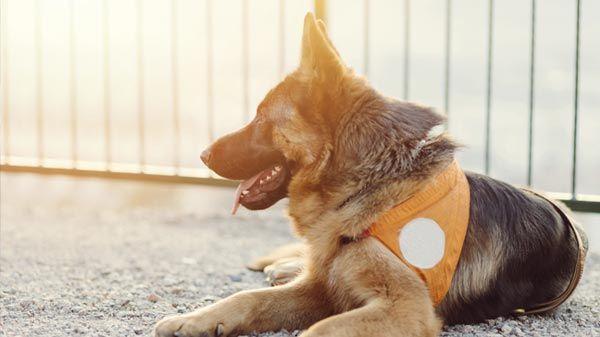 Perros de asistencia y otras mascotas de ayuda