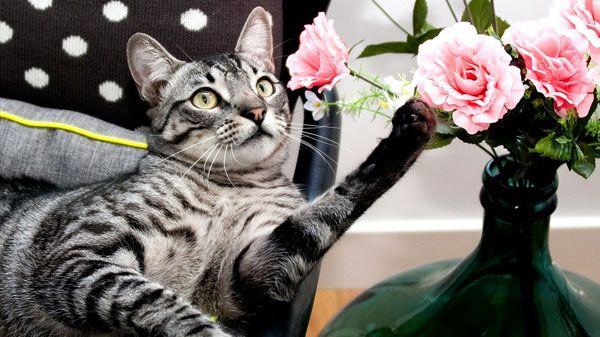 ¿Por qué es importante el ejercicio en los gatos?