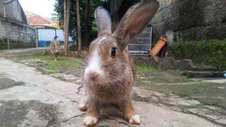 Tengo un conejo como mascota, ¿y ahora qué?