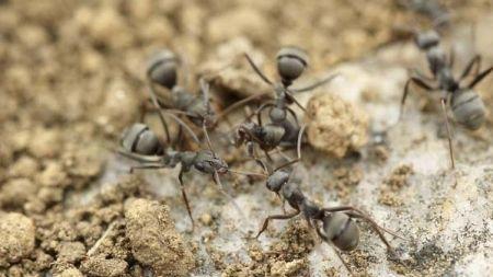 ¿Tienes tu terrario con hormigas?