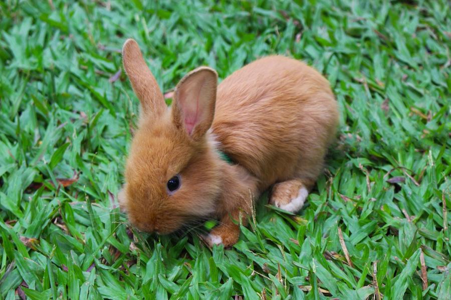 un conejo como mascota