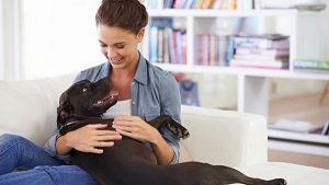 A qué jugar con perros en casa los días de lluvia