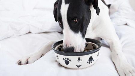 ¿Comida casera para perros o pienso?