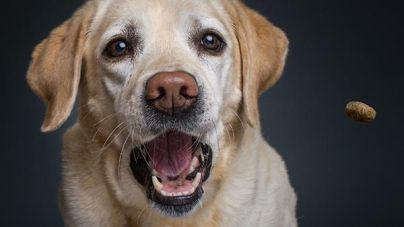 ¿Cómo premiar a un perro? Consejos y sugerencias