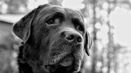 ¿Cómo tratar con perros desconfiados e inseguros?