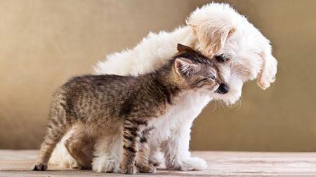 Flores de Bach para perros y gatos
