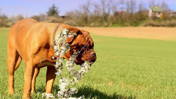Leishmaniasis en perros: ¿existe riesgo de contagio?