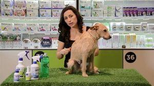 Pipetas para perros y gatos, ¡aprende a poner una pipeta!