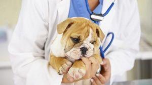 ¿Por qué es tan importante acudir al veterinario?