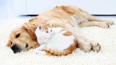 ¿Qué otros sentidos son importantes en las mascotas además del olfato de los perros?