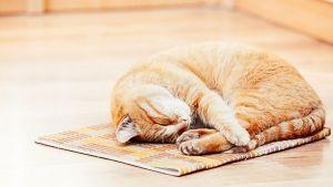 Tipos de areneros para gatos