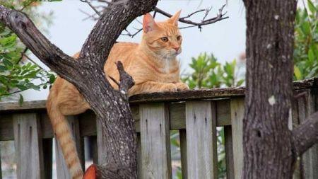 Qué hacer cuando dejamos al gato solo en casa
