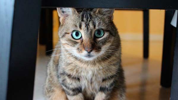 Gatos y dueños: cómo cambia la relación si el gato es macho o hembra