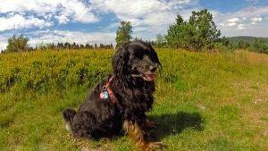 Leishmaniasis canina y cambio climático