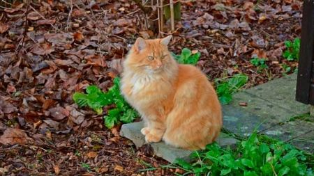 ¿Los gatos vuelven a casa?