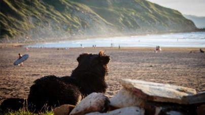 Playas que admiten perros en 2017
