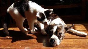 Adopción de perros y gatos, ¿cómo rehabilitarlos?