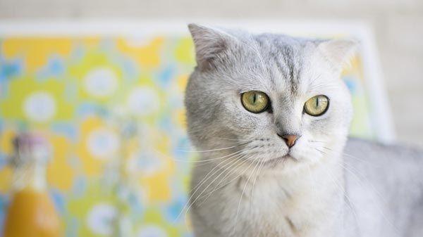 Puedo ba ar a mi gato tiendanimal - Banar gatos ...