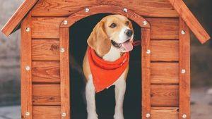 Casetas para perros en verano