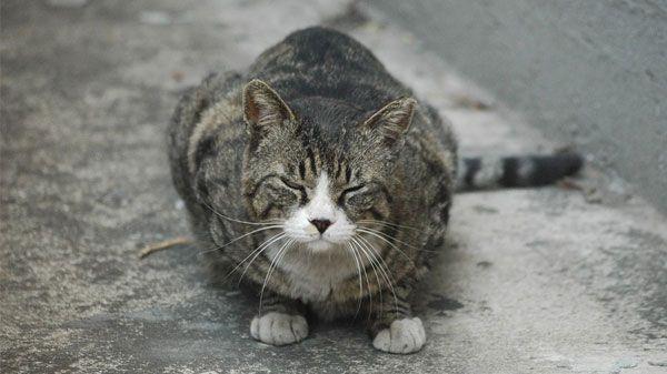 Colonias de gatos controladas