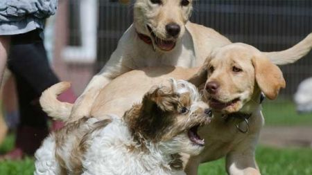 Cómo curar una herida a un perro y a otras mascotas