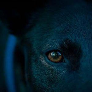 ¿Cómo ven los perros los colores? ¿Pueden distinguirlos?