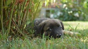 Mi perro se come sus heces: tratamiento para la coprofagia canina