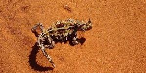 Razas de lagartos: las 10 razas más impactantes
