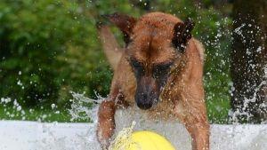 piscinas-para-perros-y-otros-trucos