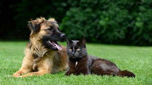 Vacunas obligatorias para perros y gatos según a dónde viajes