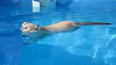 Un gato nos da lecciones de natación
