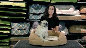 cama-ortopedica-para-perros