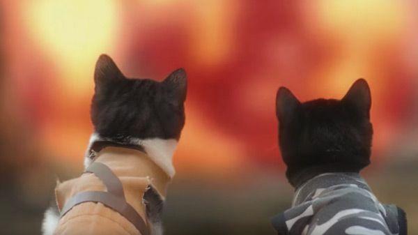 gatos-zombies-apocalipsis