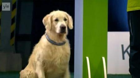 Un perro que prefiere saltarse las reglas