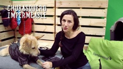 Análisis: Chubasquero con velcro para perros