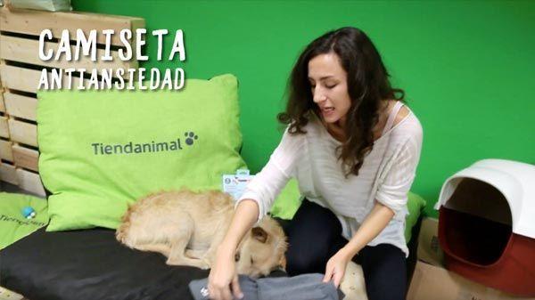 camiseta-antiansiedad-perros