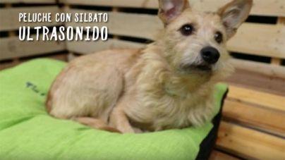 Análisis: Peluche con ultra sonido para perros