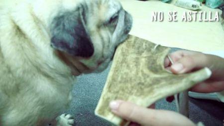 Análisis: Astas de ciervo para perros