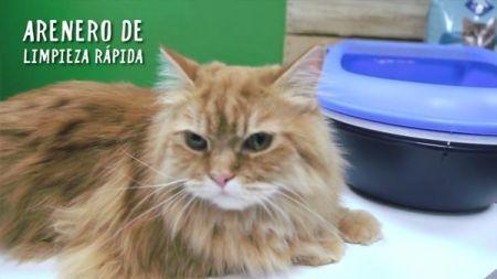 Análisis: Arenero para gatos autolimpiable
