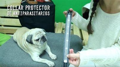 Análisis: Protector para collar antiparasitario