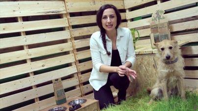 Análisis: Antimanchas de orina para el césped Dog Rocks