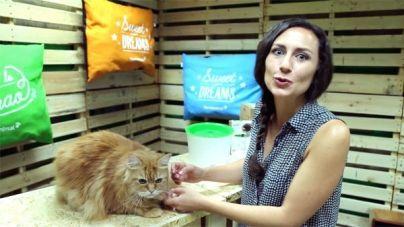 Análisis: Fuente para gatos Catit Senses